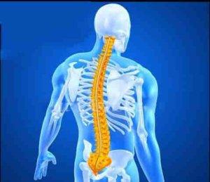 spinal şok nedir