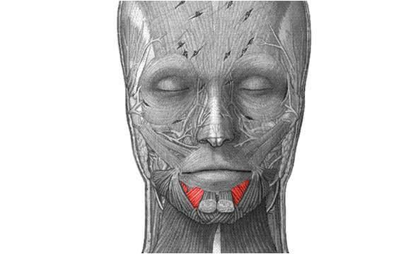 m.depressor labii inferioris