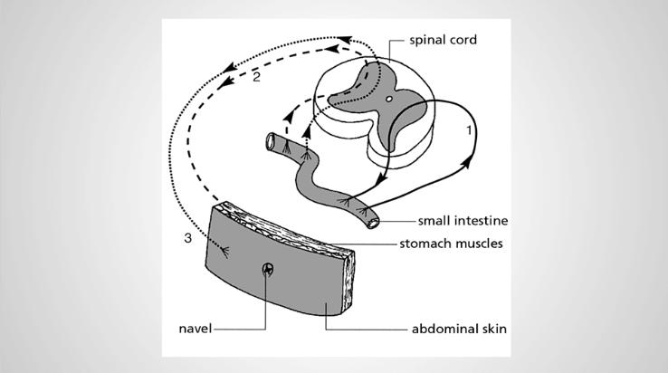 konnektif-doku-masaji-etki-mekanizmasi