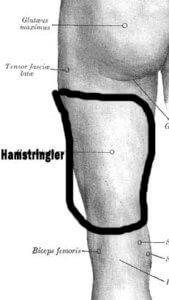 hamstring kasları hangileri
