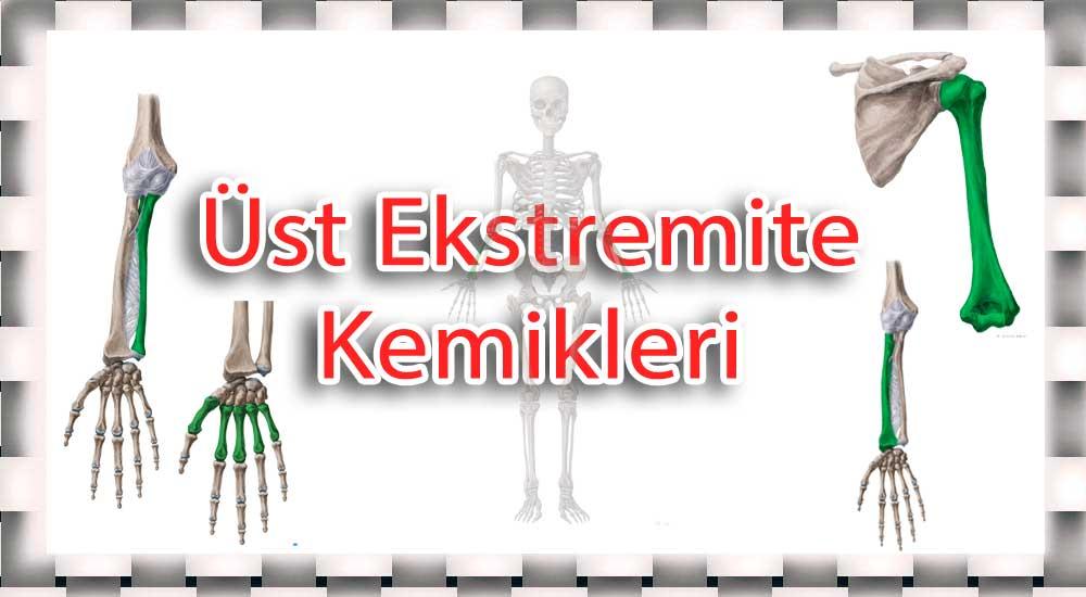 üst ekstremite kemikleri